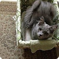Adopt A Pet :: Dana - Modesto, CA
