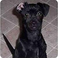 Adopt A Pet :: Ella - Mays Landing, NJ