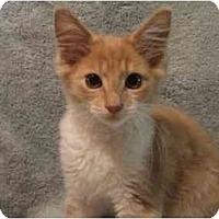 Adopt A Pet :: Manny - Jenkintown, PA