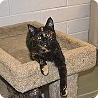 Adopt A Pet :: Kate - New Port Richey, FL