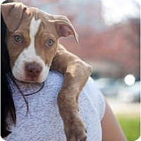 Adopt A Pet :: London - Reisterstown, MD