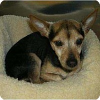 Adopt A Pet :: CharliePENDING - Toronto/Etobicoke/GTA, ON