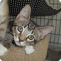 Adopt A Pet :: Dexter - Acme, PA
