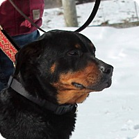 Adopt A Pet :: Garron - Lebanon, CT