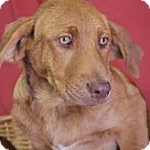 Adopt A Pet :: Ansen