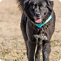 Adopt A Pet :: JJ  the Jewel - Pflugerville, TX