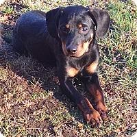 Adopt A Pet :: MILO - CHAMPAIGN, IL