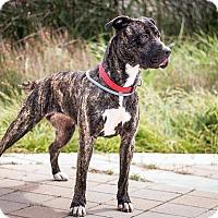Adopt A Pet :: Aster - Berkeley, CA