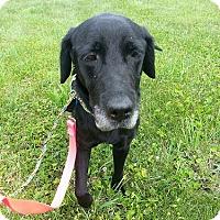 Adopt A Pet :: Liberty #2 - Buckeystown, MD