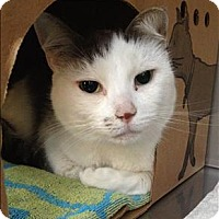 Adopt A Pet :: Dave - Vancouver, BC