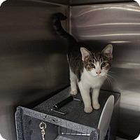 Adopt A Pet :: Gigi - Henderson, NC