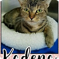 Adopt A Pet :: Kadena - Edwards AFB, CA
