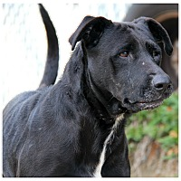 Adopt A Pet :: Gizzy - Forked River, NJ