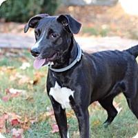 Adopt A Pet :: KONA - Franklin, TN
