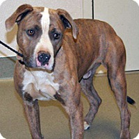 Adopt A Pet :: 322421 - Wildomar, CA