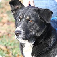 Adopt A Pet :: Sylvanas (Spayed) - Marietta, OH