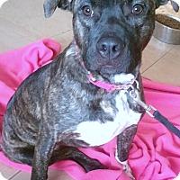 Adopt A Pet :: Virginia - Phoenix, AZ