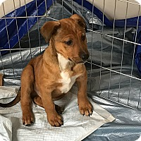 Adopt A Pet :: JACKSON - Albuquerque, NM