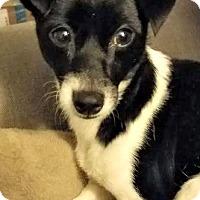 Adopt A Pet :: Wing - Bradenton, FL