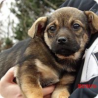 Adopt A Pet :: Remy (4 lb) Video! - Niagara Falls, NY