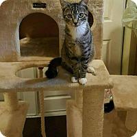 Adopt A Pet :: JJ - Waterbury, CT