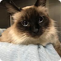 Adopt A Pet :: Piper - Oakdale, CA