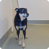 Adopt A Pet :: Cassie - Wildomar, CA