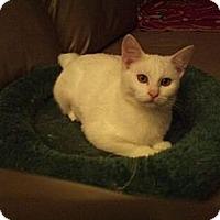 Adopt A Pet :: Tindra - Modesto, CA