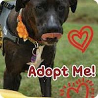 Adopt A Pet :: Sheba - Greenville, SC