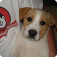 Adopt A Pet :: Truman - Apex, NC