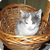 Adopt A Pet :: Mamba - Clearfield, UT