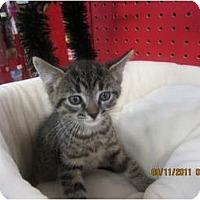 Adopt A Pet :: Tenny - Sterling Hgts, MI