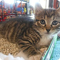 Adopt A Pet :: Blake - Reston, VA