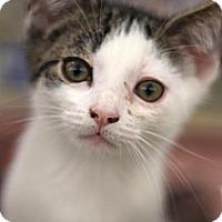 Adopt A Pet :: Colin - Sacramento, CA
