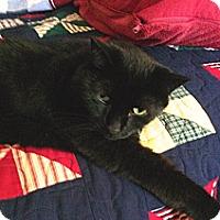 Adopt A Pet :: Sammi - Colmar, PA