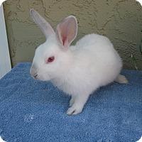 Adopt A Pet :: Oliver - Bonita, CA