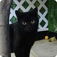 Adopt A Pet :: Ryan - Elyria, OH