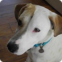 Adopt A Pet :: Greta - Hamburg, PA