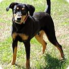 Adopt A Pet :: LEBRON
