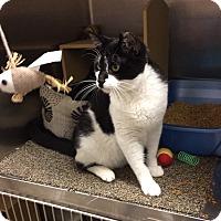 Adopt A Pet :: Bandit - Colmar, PA