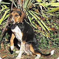 Adopt A Pet :: Louise - Oakland, AR