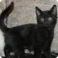 Adopt A Pet :: Fantasia - Irvine, CA