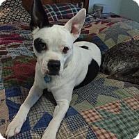 Adopt A Pet :: Joan Jett - Logan, UT