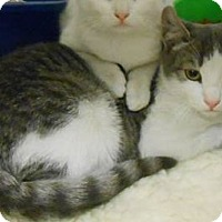 Adopt A Pet :: Scooter (FCID# 10/18/15 - 2 Foster Home) - Wilmington, DE