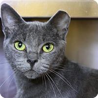 Adopt A Pet :: Juniper - Sarasota, FL