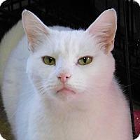 Adopt A Pet :: Oakley - Winston-Salem, NC