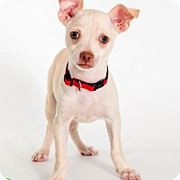 Adopt A Pet :: Bean - Savannah, GA