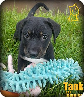 Terrier (Unknown Type, Small) Mix Dog for adoption in Beaumont, Texas - Tank