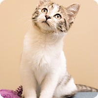 Adopt A Pet :: Frisky - Chicago, IL