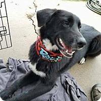 Adopt A Pet :: Begonia - Broken Arrow, OK